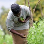 What is the potential impact from climate change for Africa's farmers?