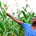 New analysis suggests gender differences in how farmers adapt to climate-smart agriculture