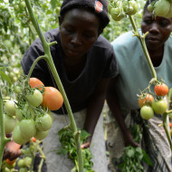 Climate Smart Solutions for African Farmers : The time is now!