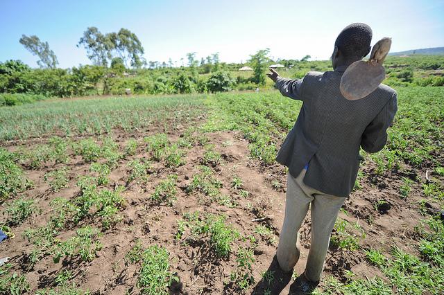 Horticulture in Lower Nyando, Kenya. Photos: K. Trautmann.
