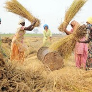 Strategising a new approach to crop insurance in India