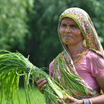 CCAFS is testing new survey tools to uncover how climate information impacts farmers' livelihoods. Photo: V. Reddy.