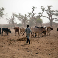 Exploring the climate-conflict nexus in Sudan