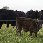 Taxing red meat may cut emissions and disease